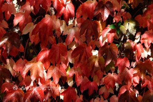Mottled light on Autumn leaves
